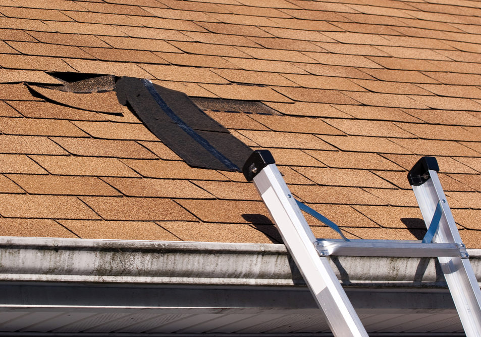 Roof Wind Damaged Shingle
